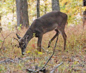 Outdoors: Early season foods key to seeing deer | Test