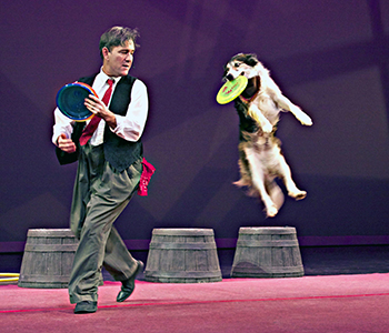Crazy canines take the stage   Test