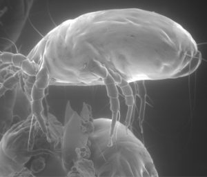 Allergies? Mites might be cause   Test