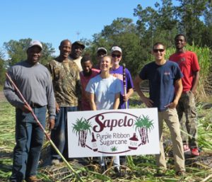 Clemson helps reintroduce purple ribbon sugarcane to Sapelo Island   Test