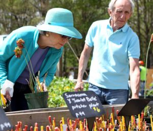 Roll up those sleeves, grab a shovel and start digging – plant sales galore! | Test