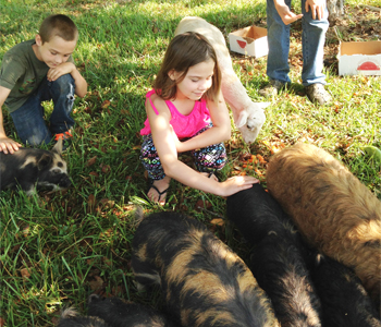 Oconee 4-H pilot project raises heritage pigs | Test