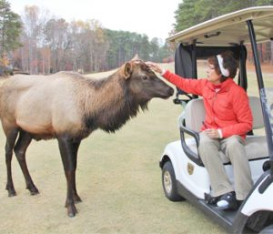 Celebrity elk spotted at Keowee Key | Test