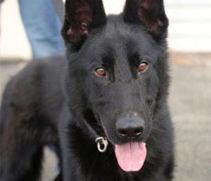 Walhalla police want K-9 | Test