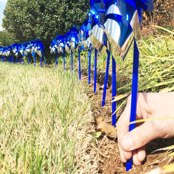 Plant a pinwheel and help prevent child abuse | Test