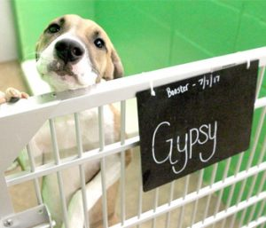 Funding cuts could close animal shelter | Test