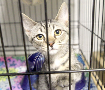 Shelter closure could increase strays | Test