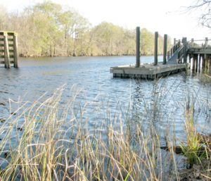New test helps track source of bacteria in water bodies | Test