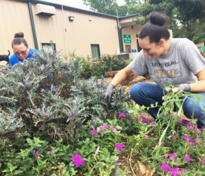 Local company pitches in  at Oconee Humane Society   Test