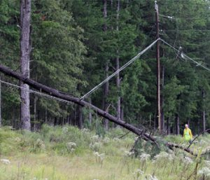 Storm causes downed trees, outages locally | Test