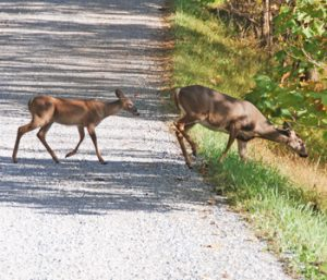 Fall means deer are out and about | Test