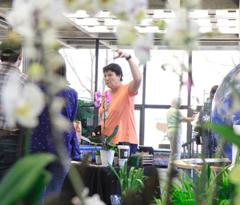Orchids take over World of Energy for annual show | Test