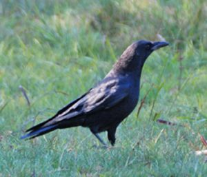 Something to crow about   Test