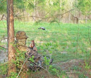 Outdoors: Advice from a veteran turkey hunter | Test