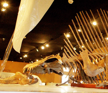 Bob Campbell Geology Museum reopens | Test