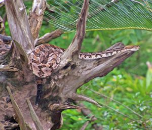 Outdoors: Yield to wildlife during summer activities | Test