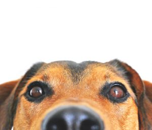 Plan for your pet's safety during fireworks displays | Test