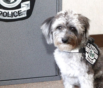 Clemson police welcome certified therapy dog | Test