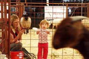 SC Foothills Heritage Fair set to begin today in Westminster | Test