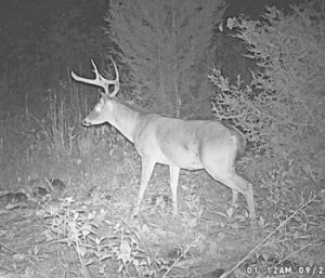 Outdoors: Piecing together the puzzle of deer movement | Test