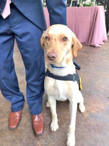Service dog returned safely after overnight search | Test