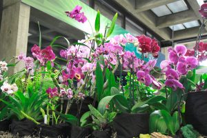 Blue Ridge Orchid Society show brings color to season | Test