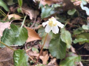 Harbinger of spring | Test