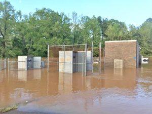Sanitary sewer overflows in creek