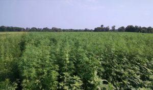 State regulators approve pesticides for hemp production