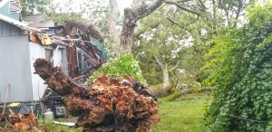 Trees crash through area homes during storm